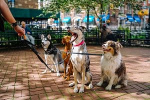 Chicago Dog Bite Lawyer