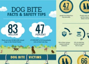 Dog Bite Facts - Infographic