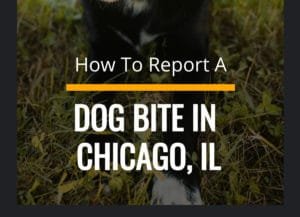 How To Report A Dog Bite in Chicago Mobile Guide